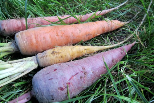 my carrots